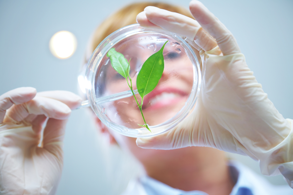 biotechnology seed agreeance Uc biotech seed central seedquest the initial concept—and subsequent path—for the uc davis seed biotechnology center (sbc) relied on a close partnership with the seed industry.
